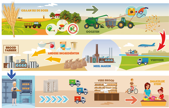 infographic over de productie van brood